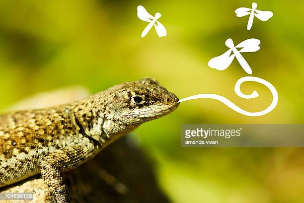 Lizard eating dragonflies