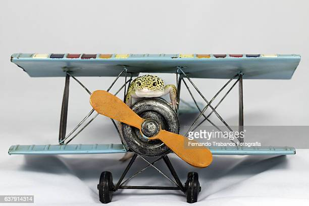 Lizard flying a plane