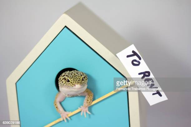 lizard holding a sign to rent a house