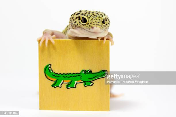 Lizard hugs a crocodile's drawing and thinks it's his father