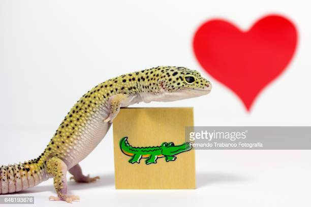 Lizard hugs a crocodile's drawing