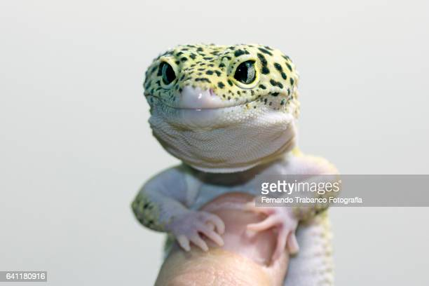 lizard in a human hand - lizard stock pictures, royalty-free photos & images