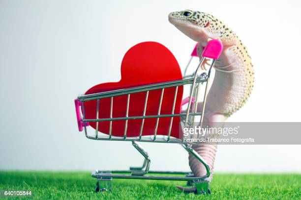Lizard in love pushing a shopping cart with a red heart