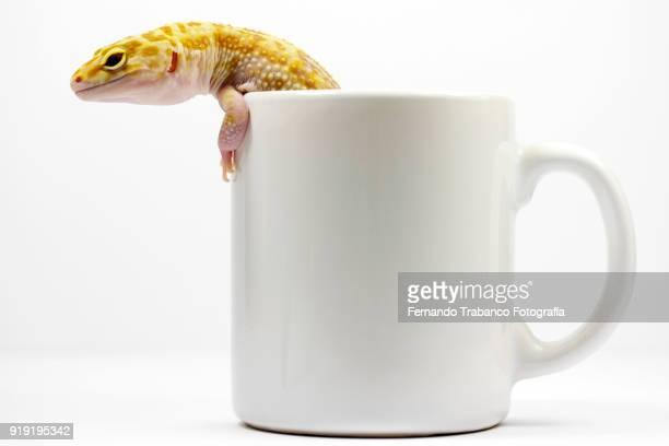 Lizard inside a cup