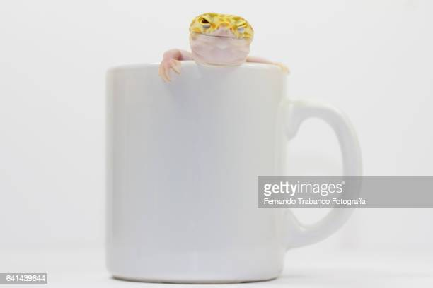 Lizard inside a cup trying to escape and winking eyes