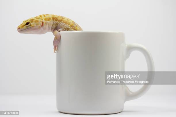 Lizard inside a cup trying to escape