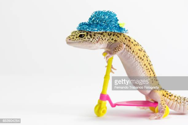 Lizard on a push scooter with blue hat on head