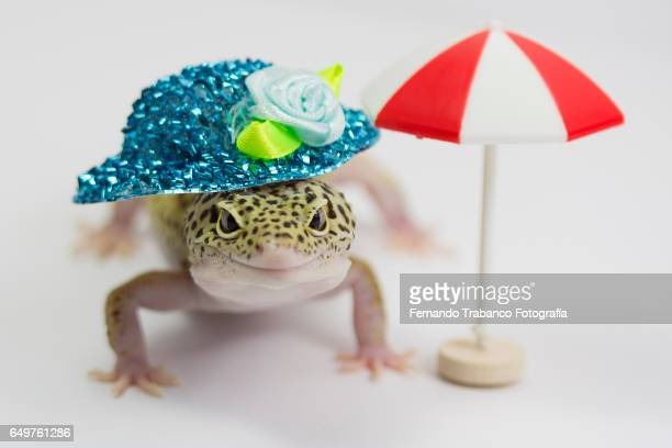 lizard on beach with a blue hat of flowers on his head and red umbrella