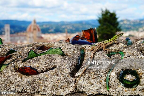 Lizard on the Wall, Old Florence in the background, Italy
