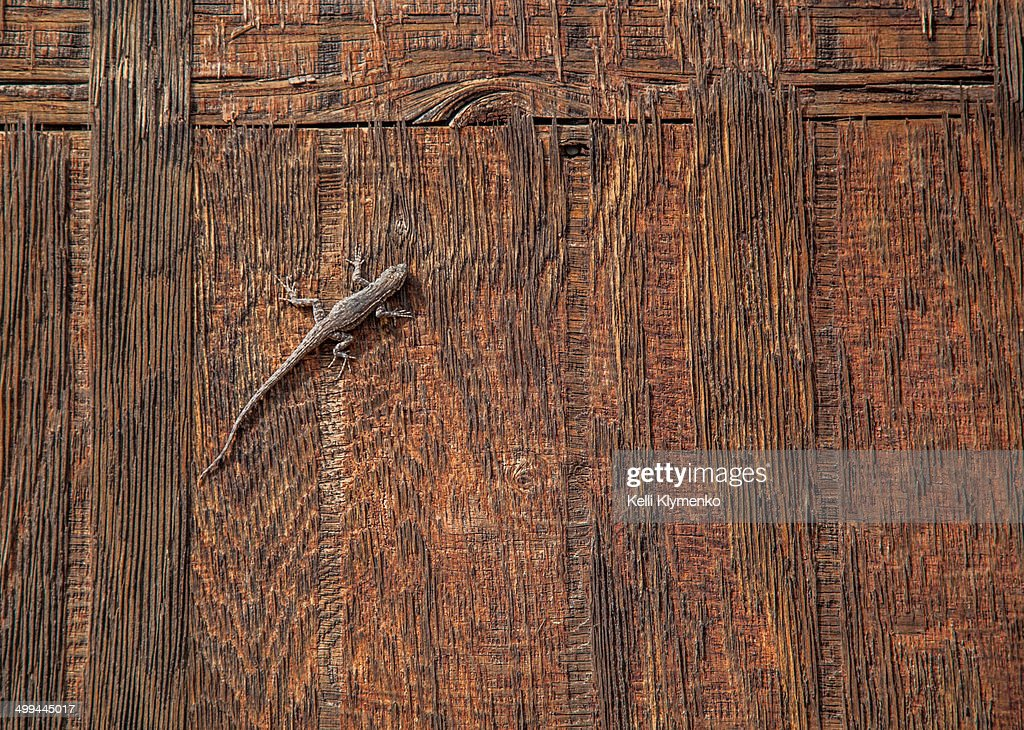 Lizard on Wood : Stock Photo