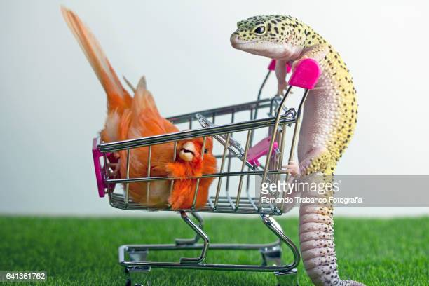 Lizard pushes a shopping cart with a bird inside