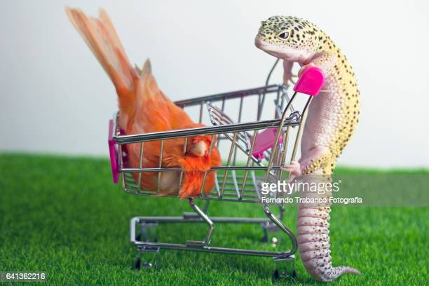 Lizard pushes shopping cart with a canary inside