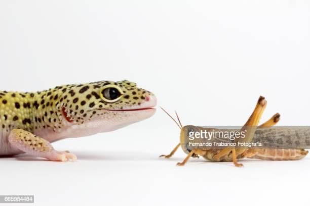 Lizard smile and grasshopper