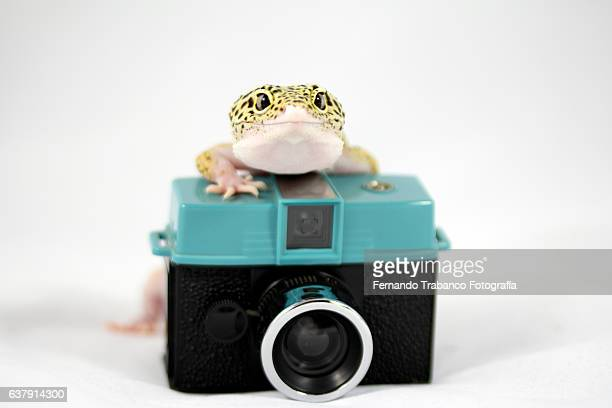 Lizard taking a photo