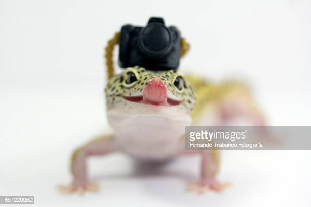 Lizard taking a photo with tongue out