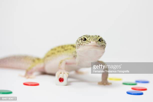 Lizard throws a dice and number one