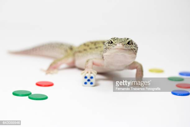Lizard throws a die and number five