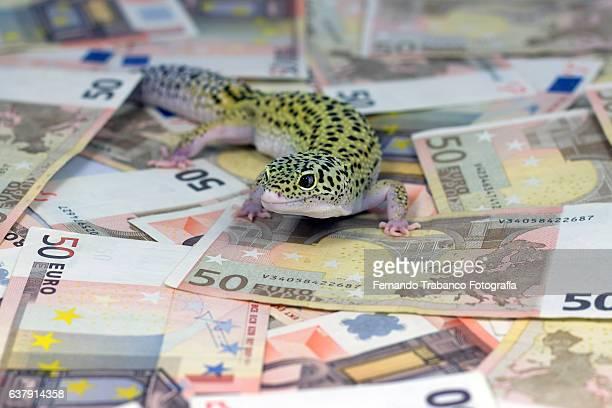lizard walking on euro banknotes