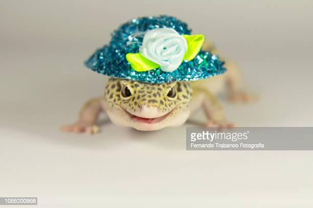 lizard with a blue hat of flowers on his head - gijón - fotografias e filmes do acervo