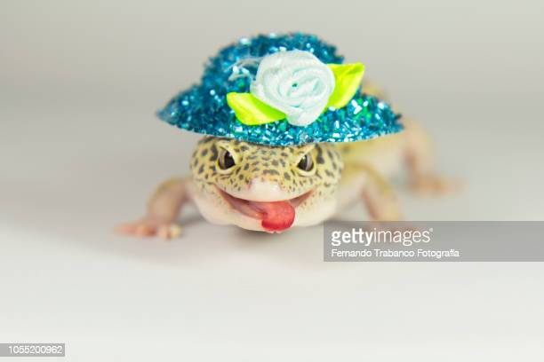 Lizard with a blue hat of flowers on his head