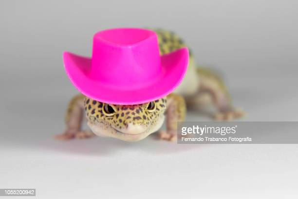 Lizard with a elegant pink hat