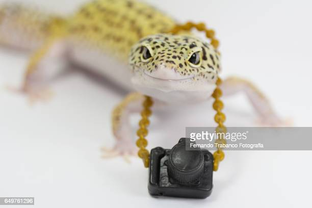 Lizard with camera of photos hung to the neck