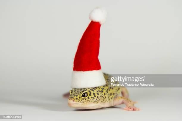 lizard with Santa hat