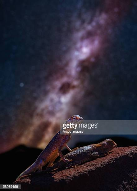 Lizards mating under the Milky Way.