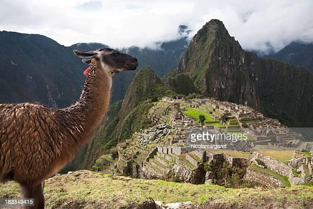 Lama e Machu Picchu XXXL