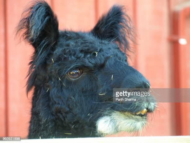 Llama says Hello World