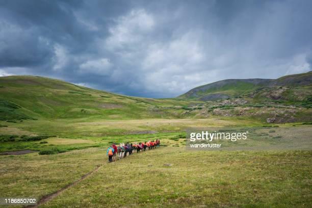 lama-trekking in weminuche wilderness, san juan mountains - tundra stock-fotos und bilder