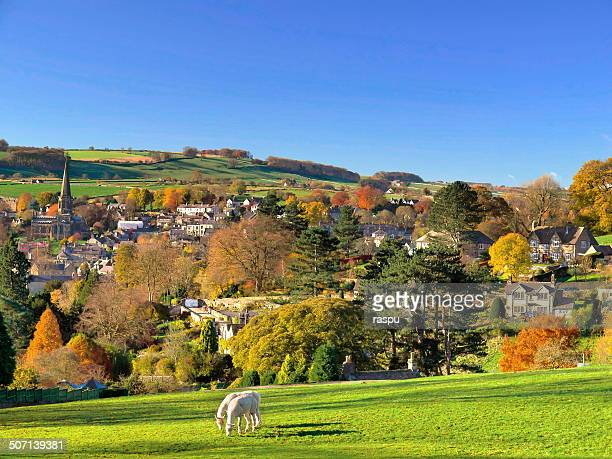 llamas gazing in the peak district - peak district national park stock pictures, royalty-free photos & images