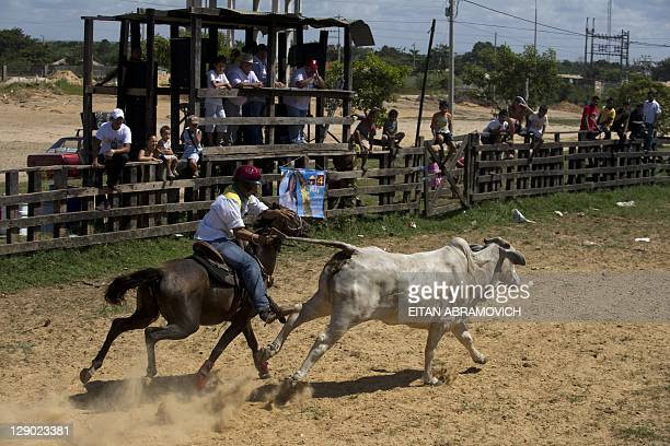 """Llanero pulls the tail of a steer in an attempt to knock it over during a """"Coleo"""" competition in Puerto Gaitan, Meta department, center Colombia on..."""