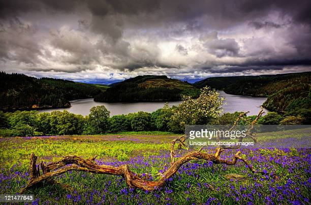 llyn brianne - brianne stock pictures, royalty-free photos & images