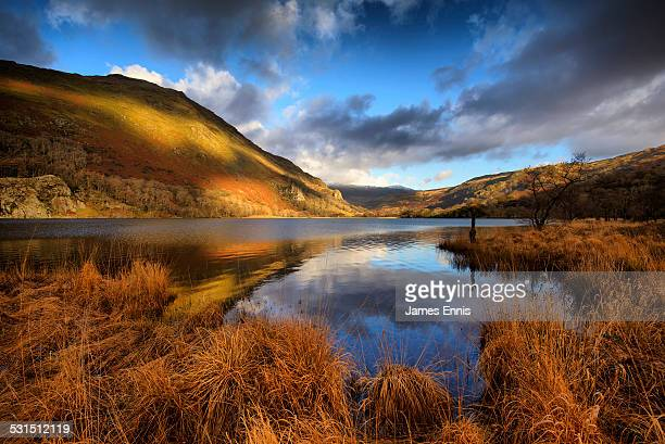 llyn gwynant lake, snowdonia national park, uk - snowdonia stock photos and pictures