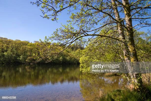 Llyn Mair, Snowdonia national park, North Wales, UK