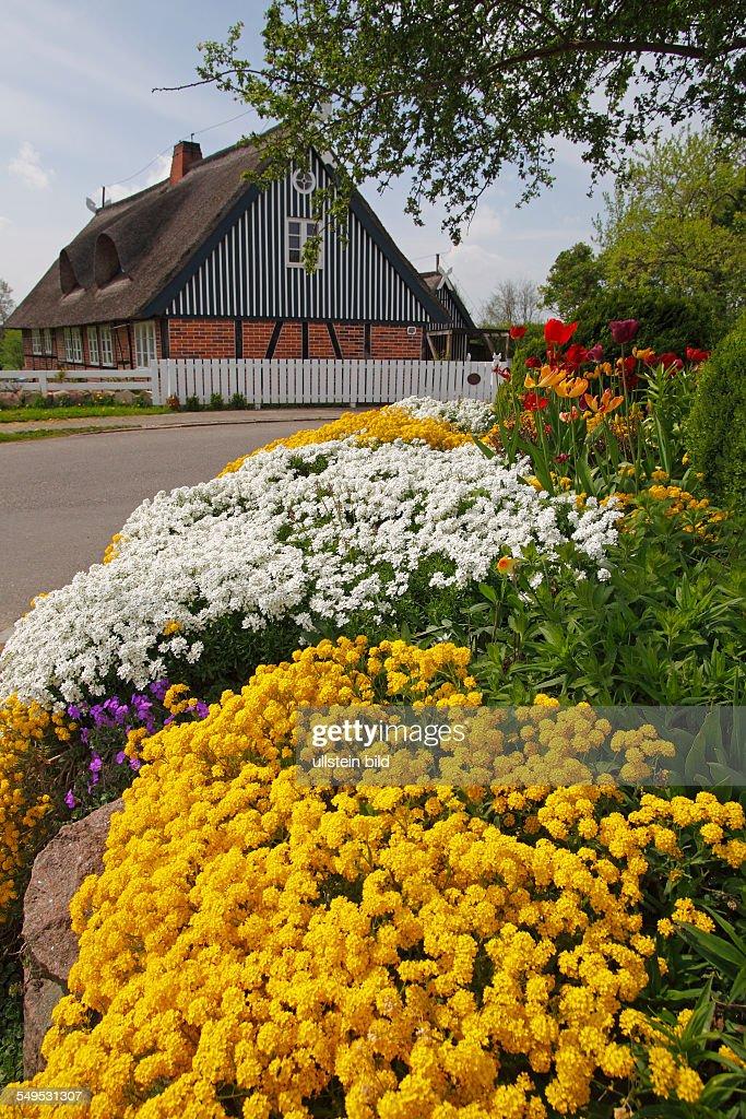 Ländlicher Garten im Frühling mit Polsterstauden Pictures | Getty Images