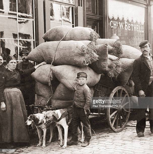 A loaded cart pulled by two dogs in Belgium circa 1918