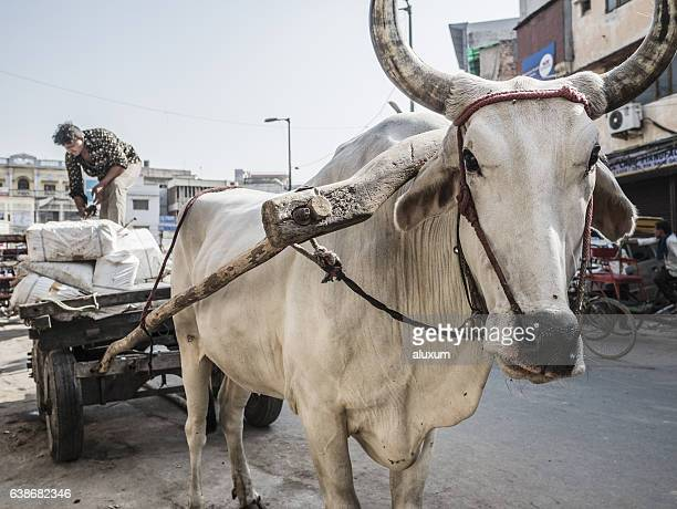 loaded ox cart in old delhi india - ox cart stock-fotos und bilder