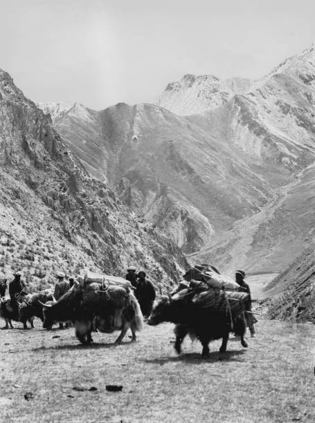 loaded yaks kashmir to sinkiang pictures getty images
