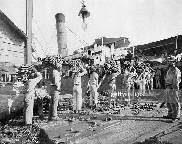 Loading bananas Port Antonio Jamaica c1905 Photograph from Picturesque Jamaica by Adolphe Duperly Son
