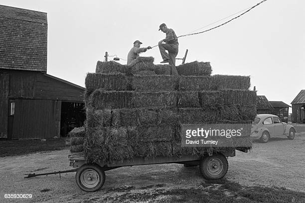 Loading Cart with Hay Bales