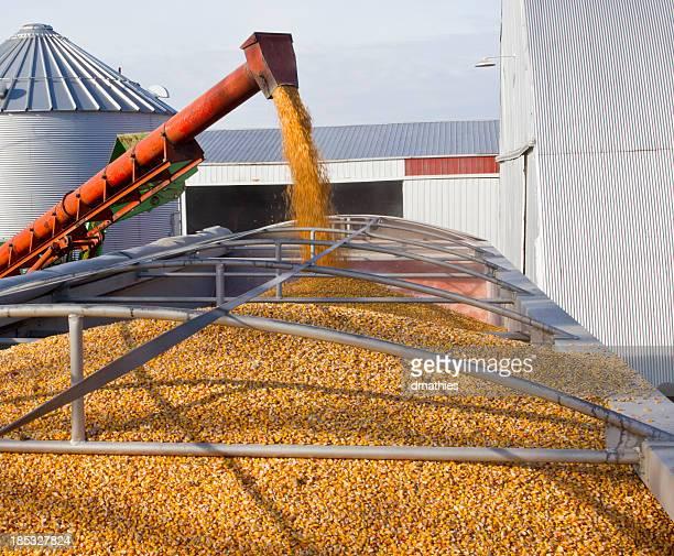 Chargement de maïs de poubelles dans la bande-annonce