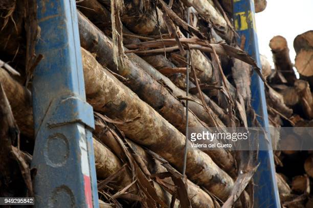 Loading of eucalyptus to supply the industry