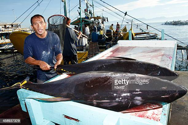 loading tuna into a cart - yellowfin tuna stock photos and pictures