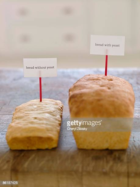 Loaves of bread used for science project