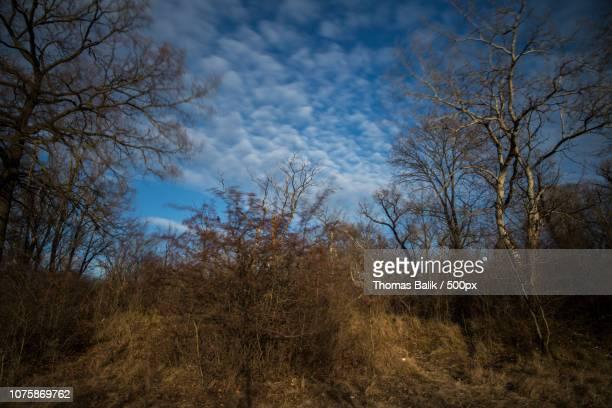 60 Top Lobau Pictures Photos Images