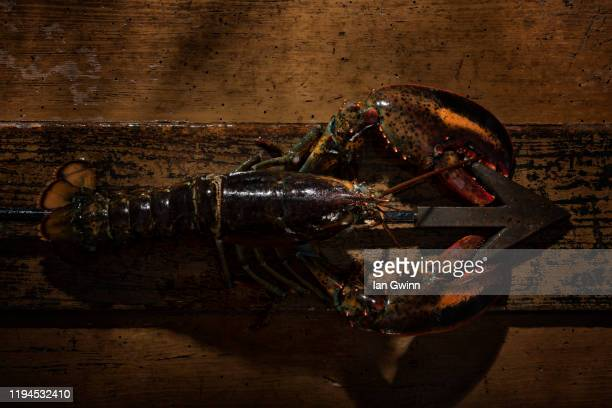 lobster and harpoon - ian gwinn stock pictures, royalty-free photos & images