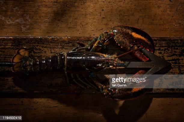 lobster and harpoon - ian gwinn stock-fotos und bilder