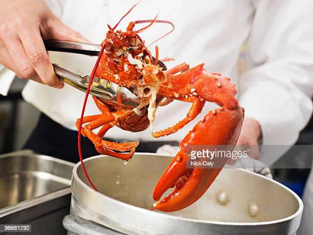 a lobster being lifted out of the pot - aragosta foto e immagini stock